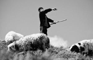 Манифестор. Пастух всех овец